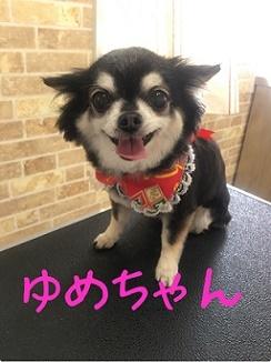 5月10日ゆめちゃん2