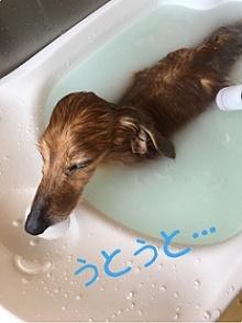 5月20日ダンクちゃん1