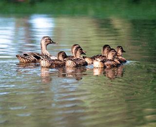 Duck_Ep_2.jpg