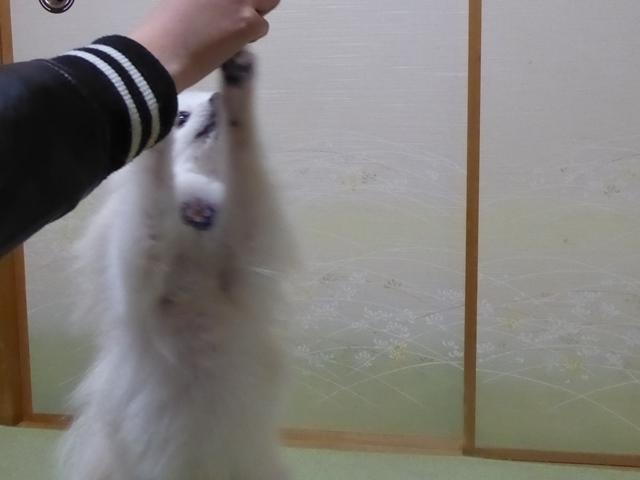 20170325ポンころ綺麗⑤