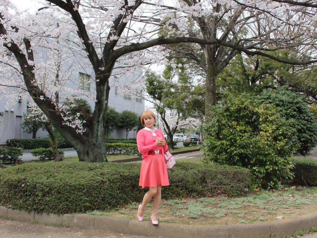 オレンジスカートカーデ桜D(6)