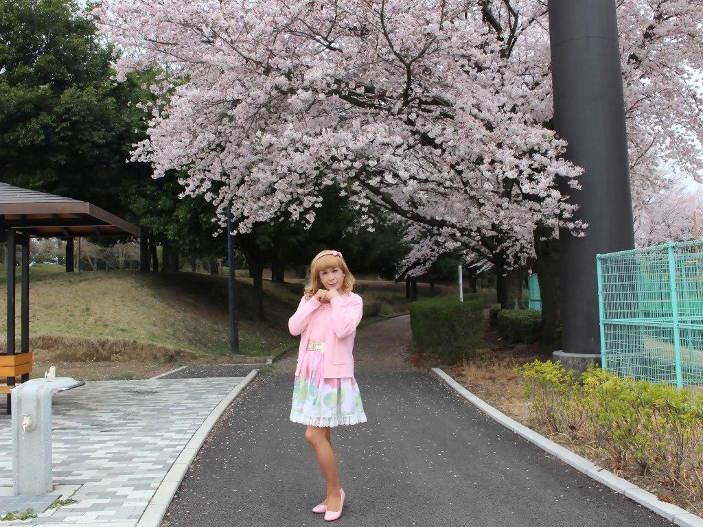 桜とピンクカーデA(4)