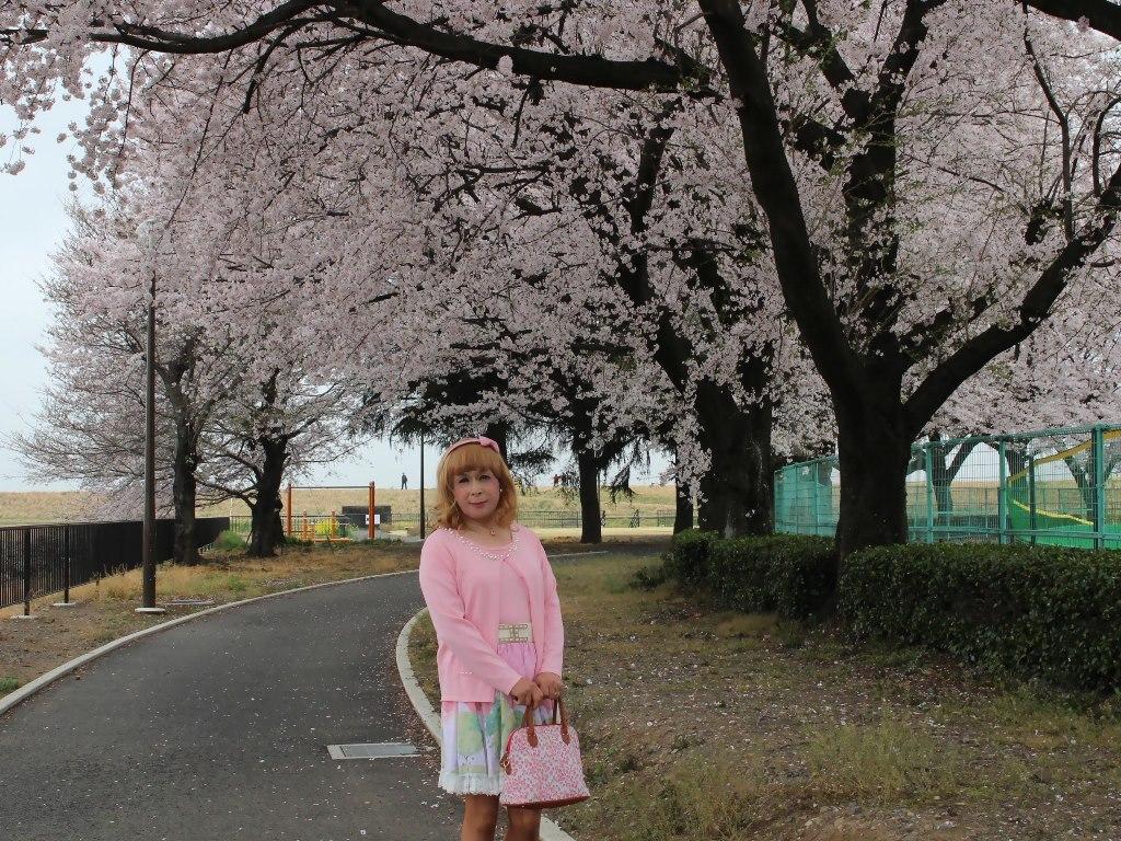 桜とピンクカーデA(3)