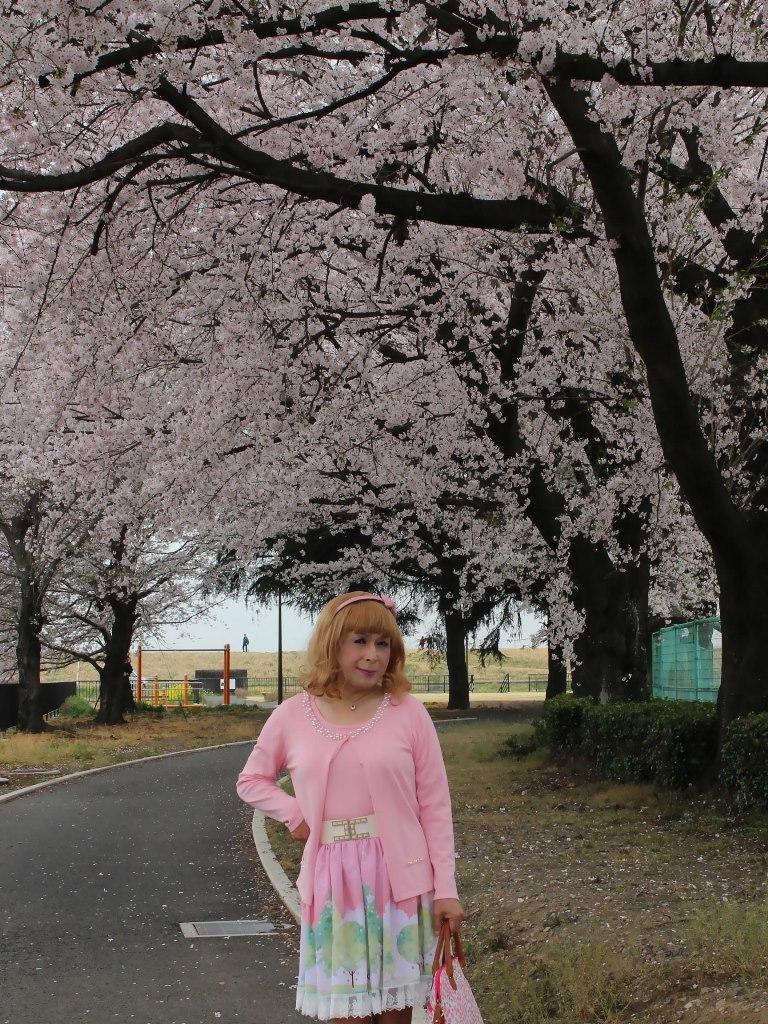 桜とピンクカーデA(1)