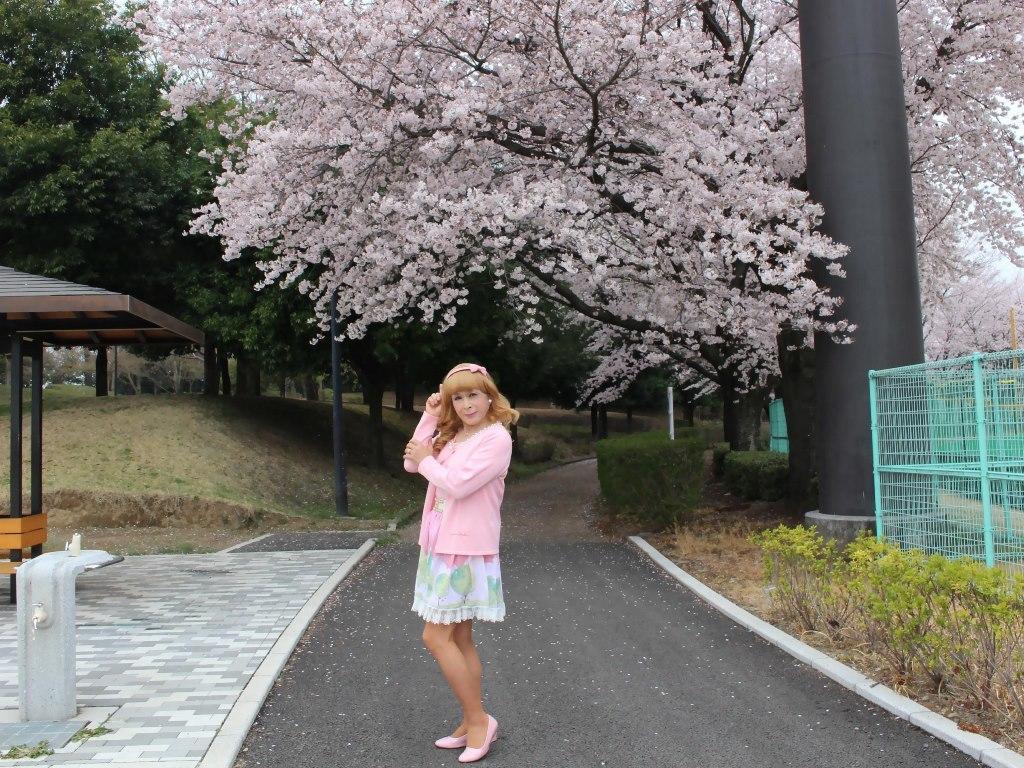 桜とピンクカーデA(7)