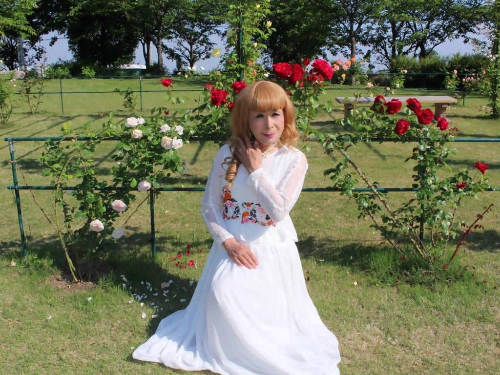 白ドレスバラ園H(7)
