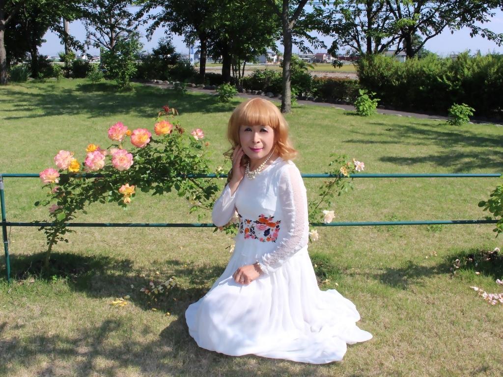 白ドレスバラ園H(3)