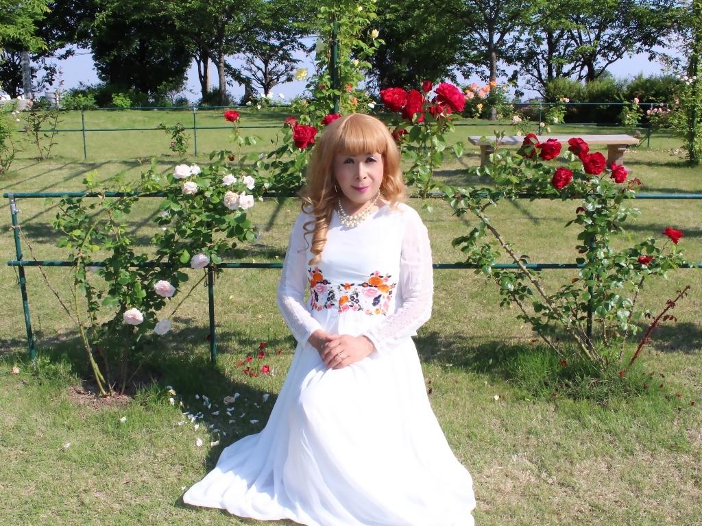 白ドレスバラ園H(6)
