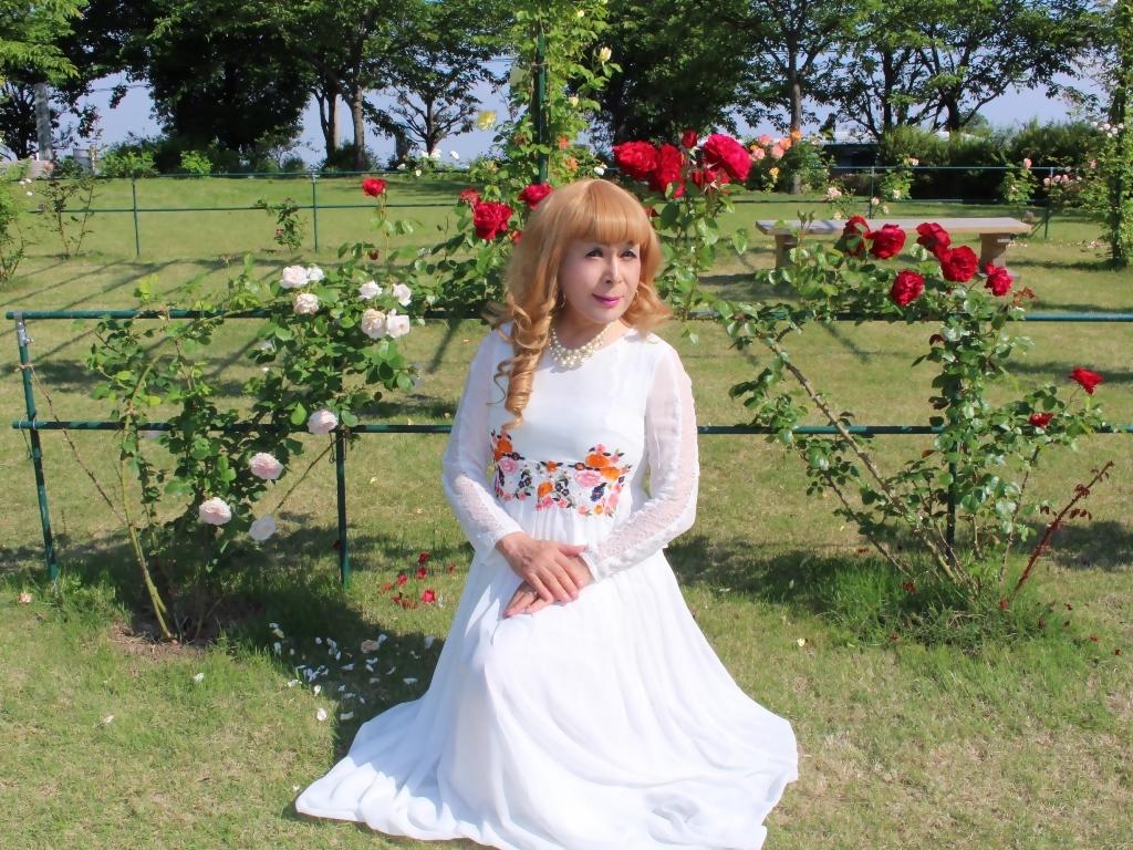 白ドレスバラ園H(8)