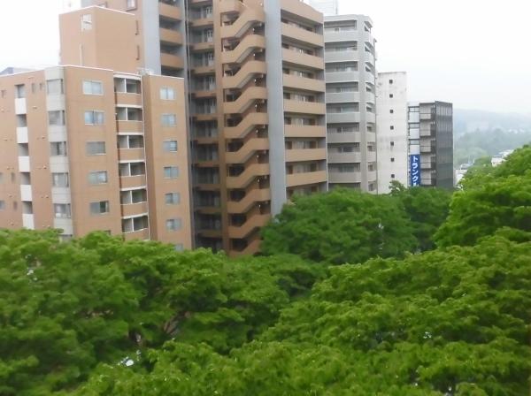 002 欅並木を上からCIMG0455 (600x448)