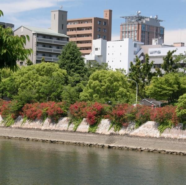 102 川沿いの夾竹桃 IMG_9493 (600x597)