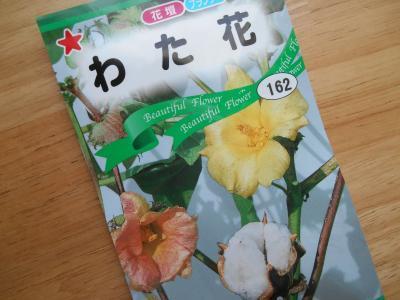 17'4.28 わた花