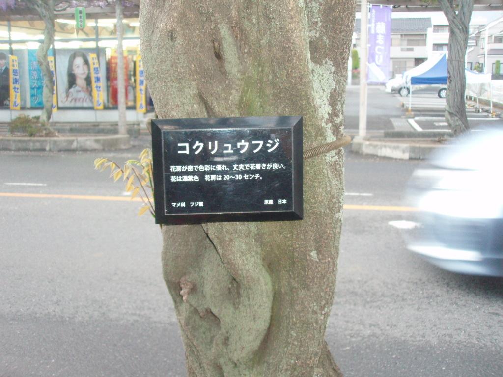 P4291358.jpg