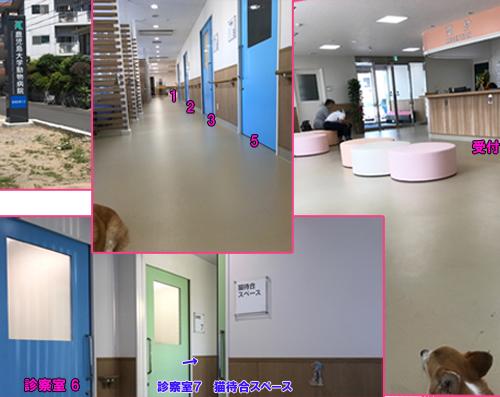 鹿児島大学動物病院1