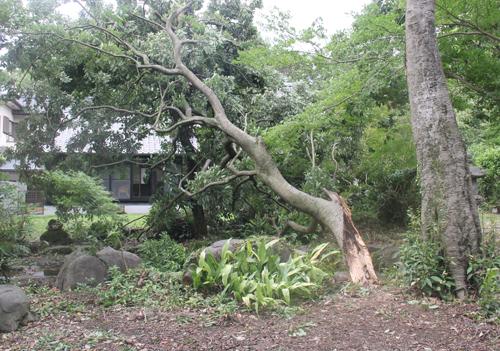 0704台風後2