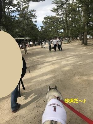 IMG_2143_convert_20170622225941.jpg