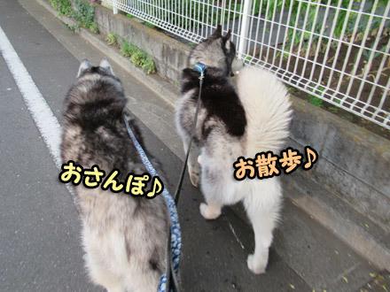 ふたりで散歩