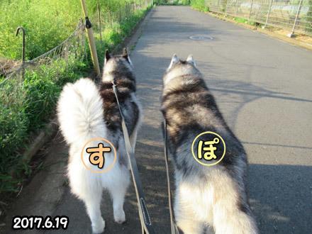 ポトスっちゃんのお散歩