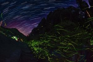 星とゲンジボタルの光跡③