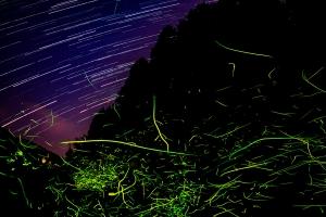 星とゲンジボタルの光跡①