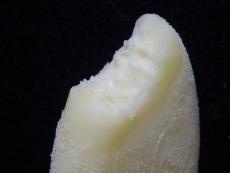 ミルクレアレモン