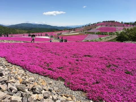 2017年茶臼山芝桜まつり(6)
