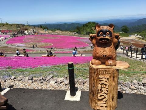 2017年茶臼山芝桜まつり(8)