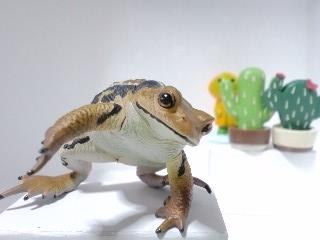 アズマヒキガエルのお姿