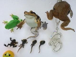 ヒキガエルとアマガエル 全6種