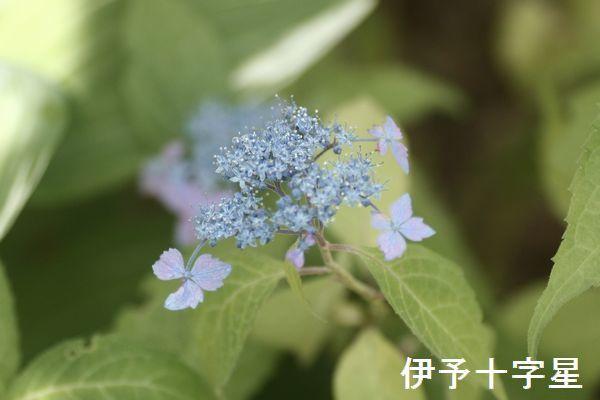 IMG_7530.jpg