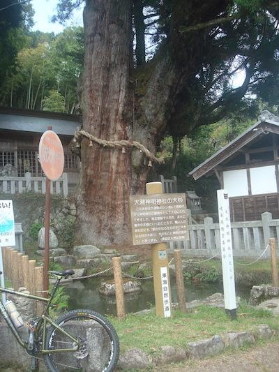 8 大杉DSC01423