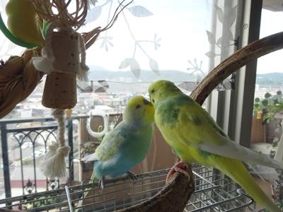 2羽の世界