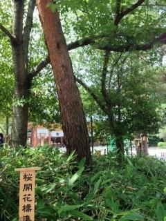 27may2017 桜木神社 14
