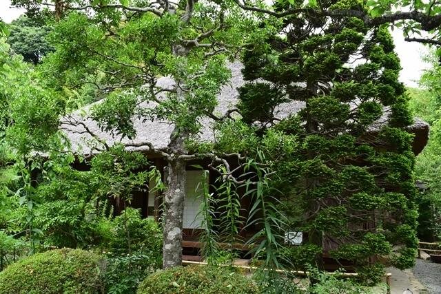 京王百草園16