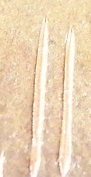 円とだ円 彫金 (2)