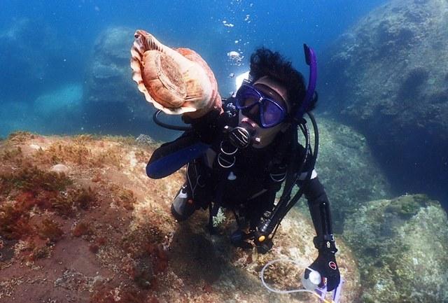 デカホラ貝web