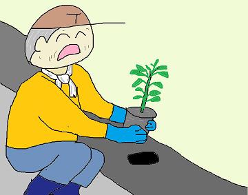ピーマンの定植