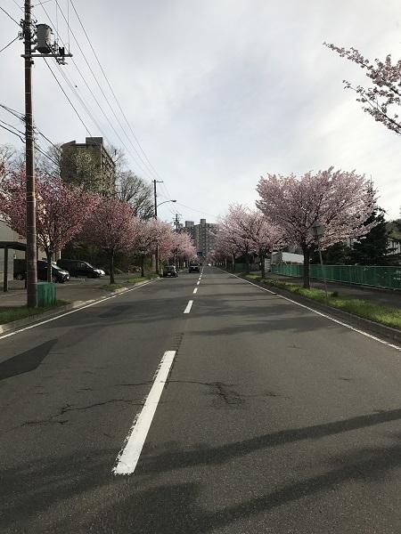 2017_sakura.jpg