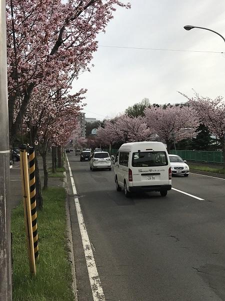 2017_sakura02.jpg