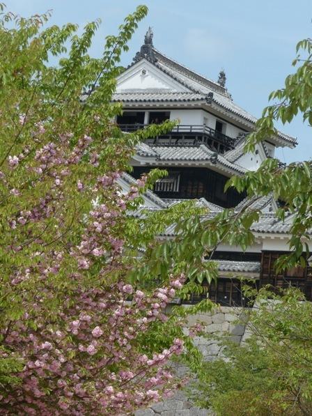 松山城 大天守 & 八重桜