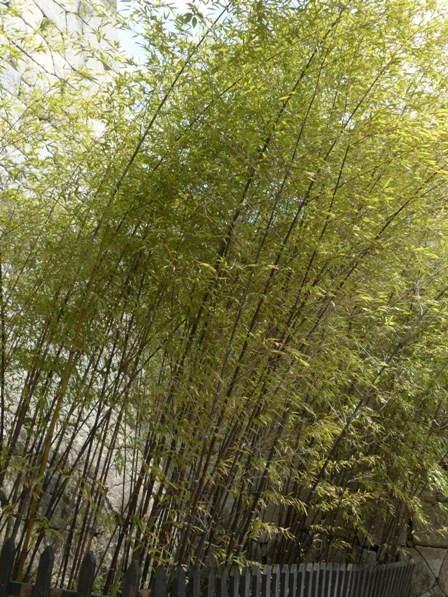 お城山 紫竹