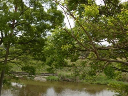 川沿いの木々