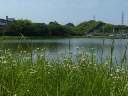 堀江新池親水公園 3