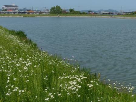 堀江新池親水公園 5