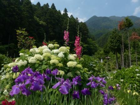 白猪の滝・花菖蒲園 2