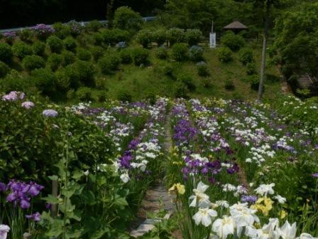 白猪の滝・花菖蒲園 3