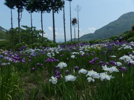白猪の滝・花菖蒲園 5