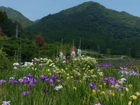 白猪の滝・花菖蒲園 1
