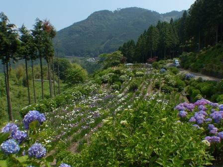白猪の滝・花菖蒲園 8