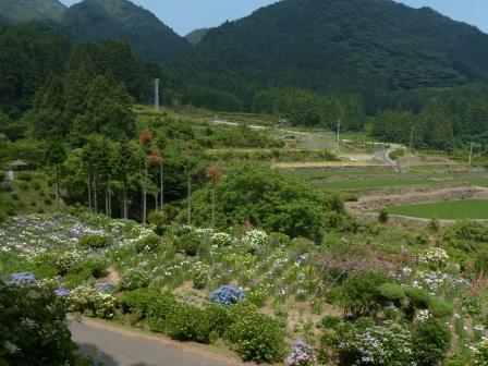 白猪の滝・花菖蒲園 12